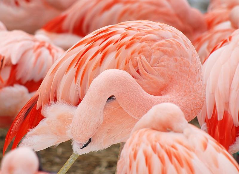 Чудесный мир птиц! Разнообразие птичьего мира!
