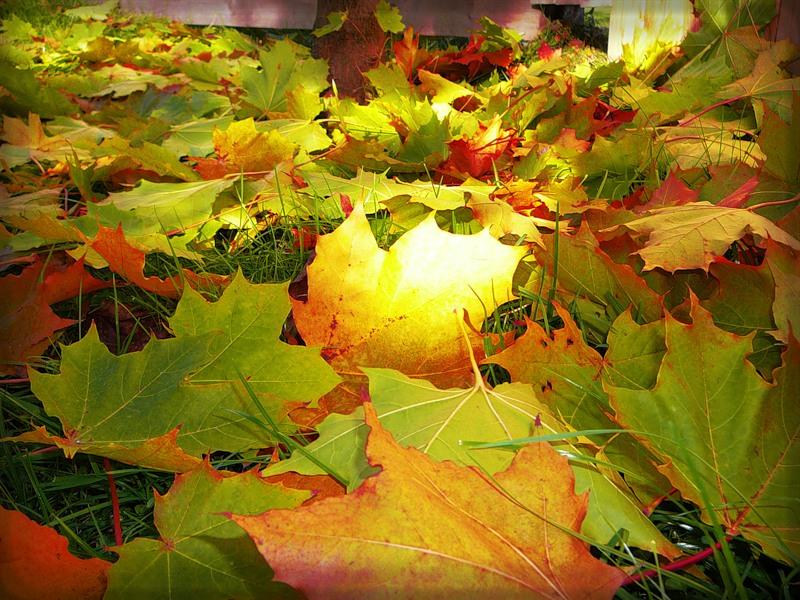 Осенние размышления! Осенняя поэзия!Осенние приметы!