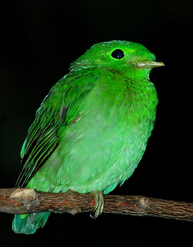 Диковинный мир! Потрясающе-красивые птицы!