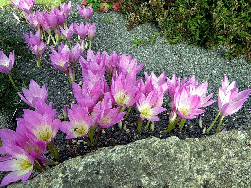 Королевские ботанические сады Кью! Англия