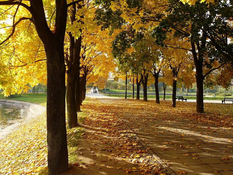 Осенняя поэзия, приметы и размышления