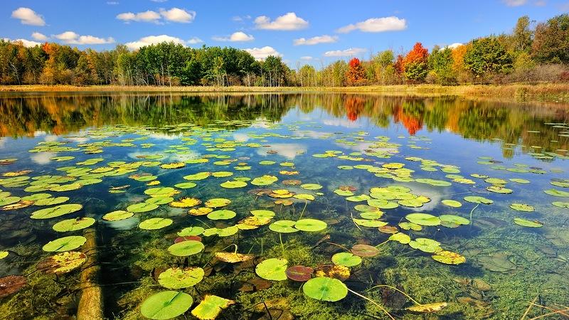 Зеркальное отражение осени в воде! Буйство осенних красок над зеркалом озер!