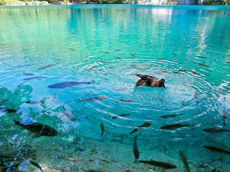 Национальный парк «Плитвицкие озёра» Потрясающе красиво!