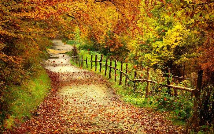 Дорога в золотую осень!
