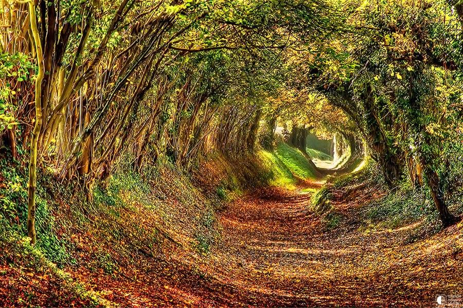 Загадочные тоннели, созданные природой!
