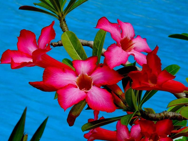 Город Вечной весны - Далат, Вьетнам!