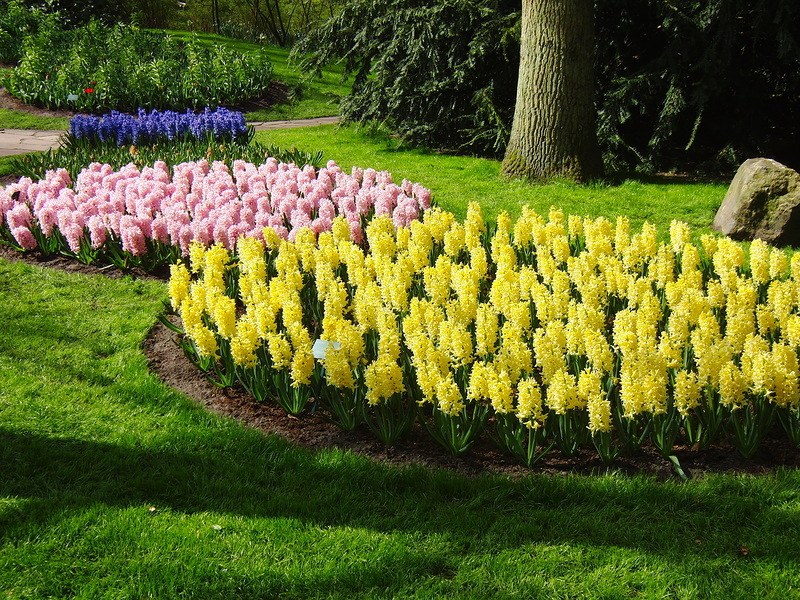 Кёкенхоф, Королевский парк цветов в Нидерландах!