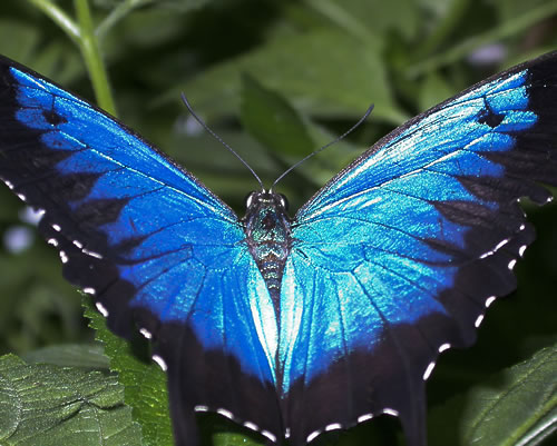 Самые красивые и удивительные бабочки мира!