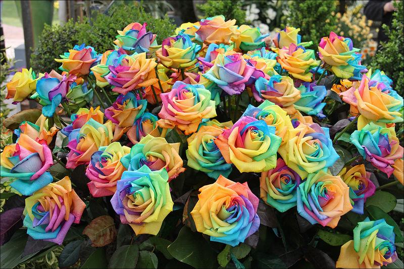 В парке замка Грот Бейгарден! Ежегодная выставка цветов