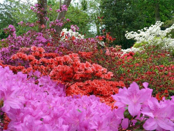 Английский Сад Эксбери (Exbury Gardens). Рододендровый рай