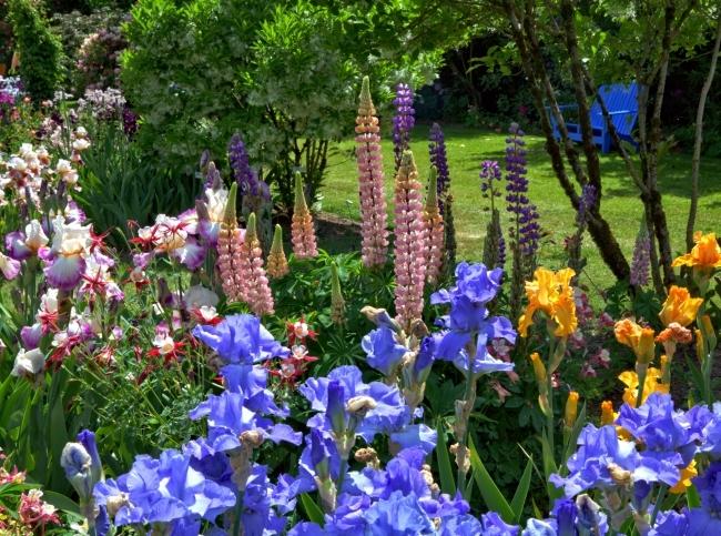 Ирисы, и их разновидности в нашем саду