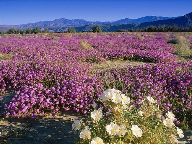 Цветущая пустыня штата Юта