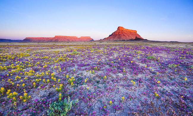 Бедленд (badlands). Цветущая пустыня штата Юта