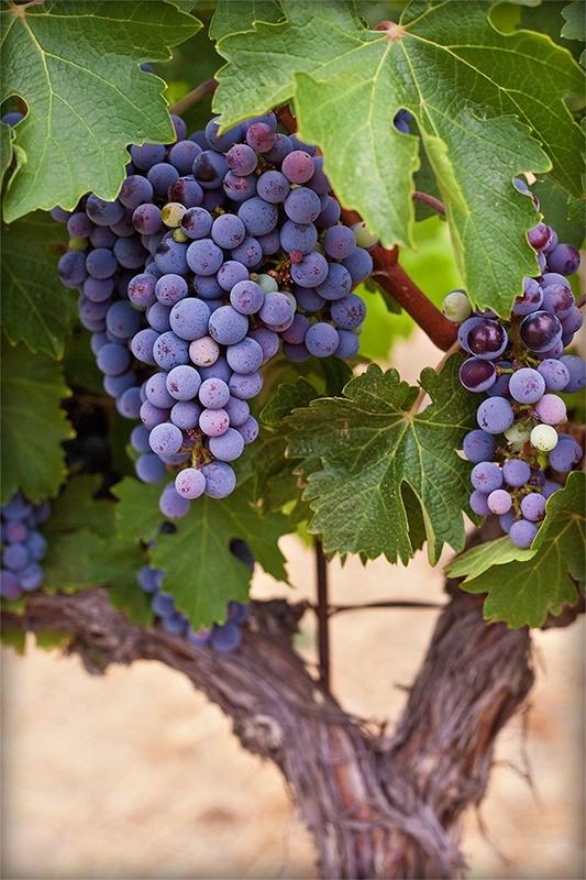 Самые дорогие вина и винодельческое хозяйство Шато Марго