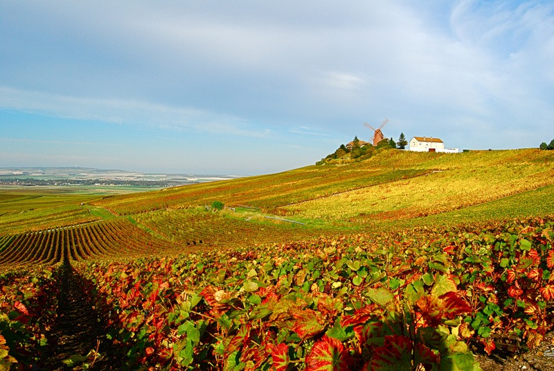 Винодельческое хозяйство Шато Марго