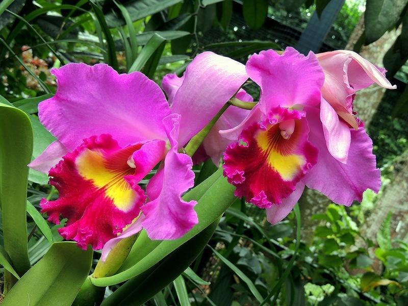 Ботанический сад Сингапура. Парк Орхидей