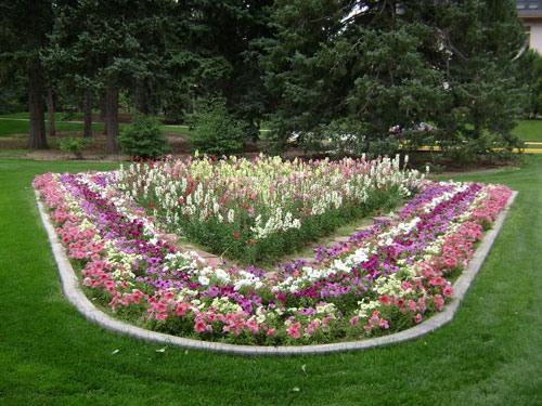 Какие цветы можно сеять на рассаду с февраля
