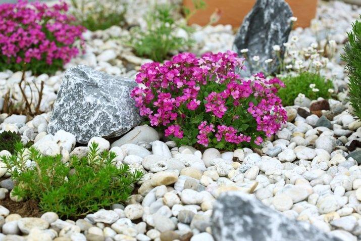 Каменистая горка, рокарий, альпийская горка. Руководство по устройству