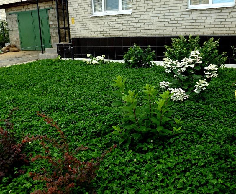 Красивый газон, выбор и назначение