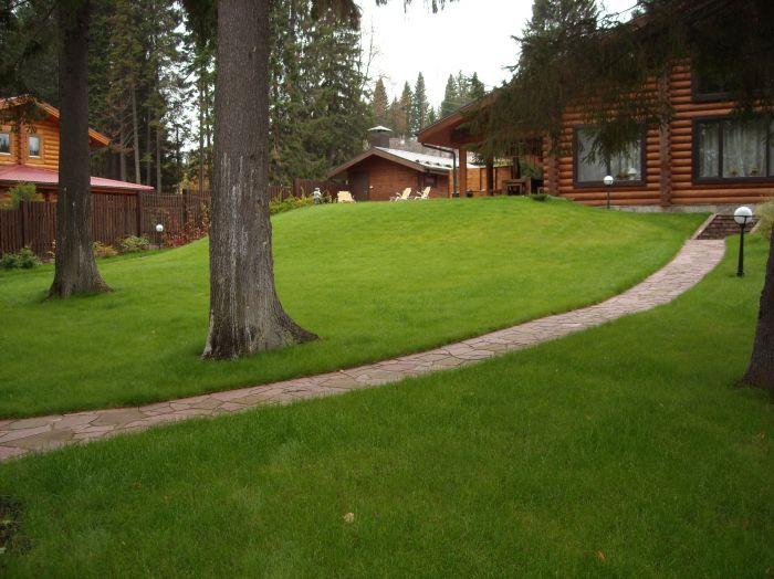 Садово-парковый газон