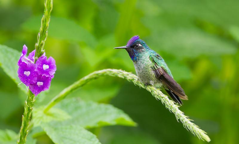 Колибри, самая маленькая и выносливая птичка