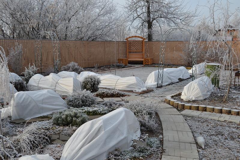 Подготовка сада к зиме. Полезная памятка