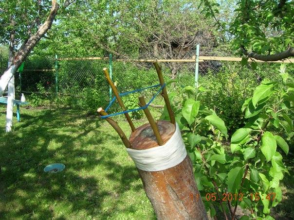 Прививка деревьев за кору