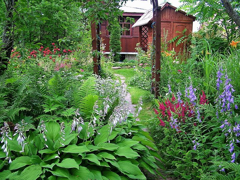 Папоротник в саду. Выращивание и размножение