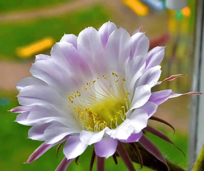 Кактусы. Полезные советы по выращиванию и содержанию