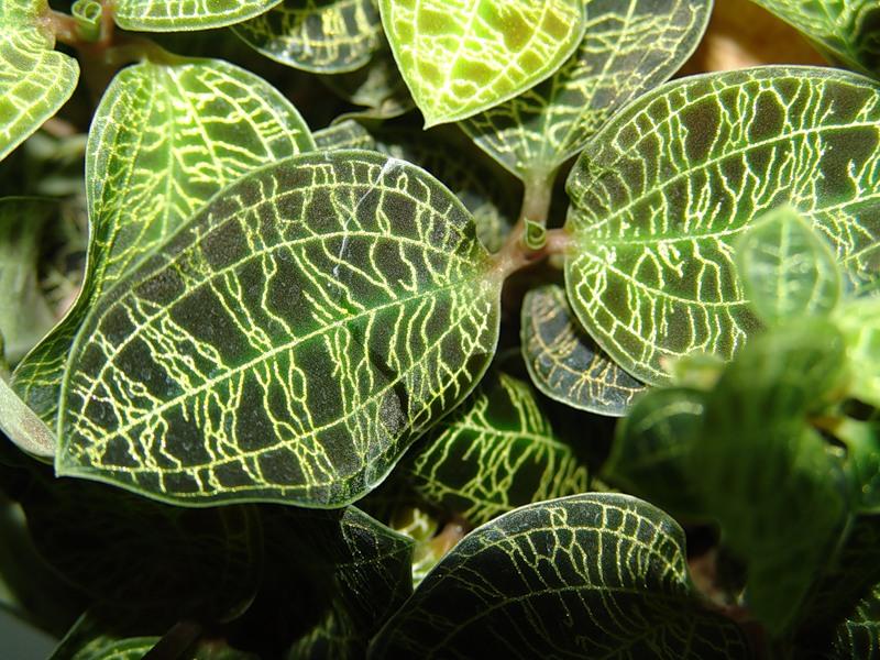 Самые редкие орхидеи мира.