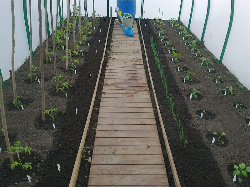 Выращиваем огурцы, помидоры, перцы и зелень в теплице. Практические советы
