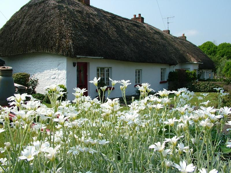 Ирландия, страна вечной весны и красоты  38