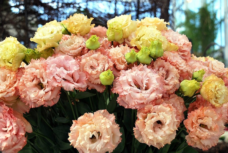 Флориада 2012. Международная выставка садоводства