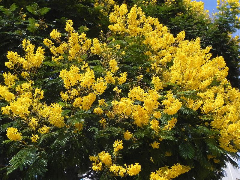 15 самых красиво цветущих деревьев планеты