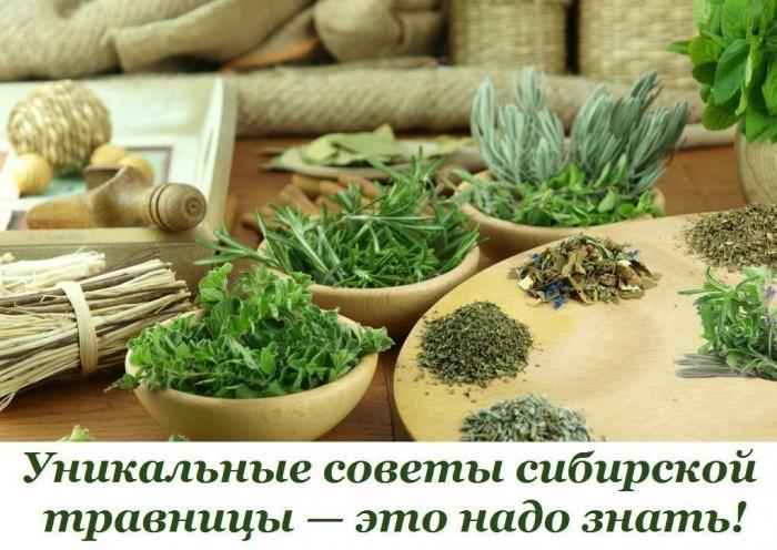 Актуальные советы сибирской травницы Л.Н. Суриной
