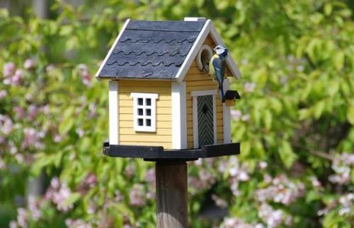 Лучшие ответы на главные вопросы садовода и огородника