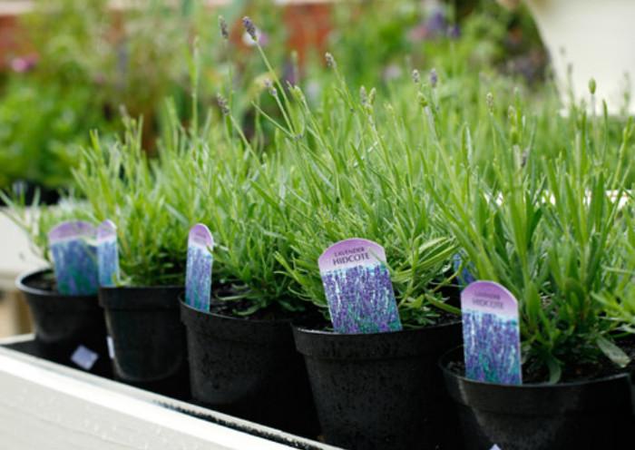 Выбор семян, посев, выращивание. Актуально для садовода и огородника